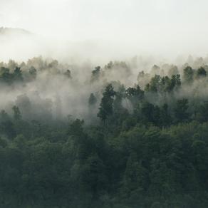 Vocês sabem como as árvores lidam com o estresse?
