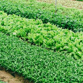 Tem como utilizar óleos essenciais na Agricultura?