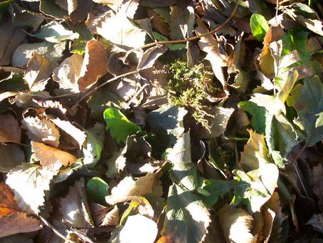Importância dos metabolitos orgânicos voláteis no solo