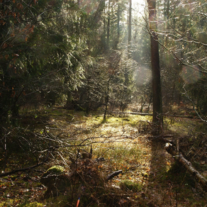 Moléculas de OEs influenciam a quantidade de chuva das florestas?