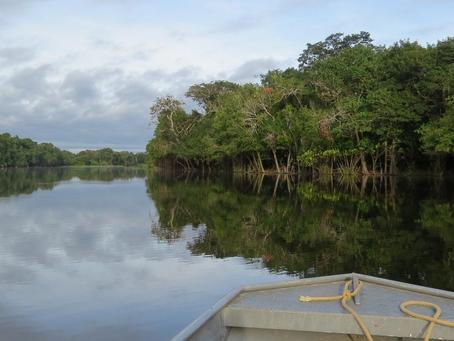 Precisamos falar sobre a Amazônia! E suas moléculas voláteis