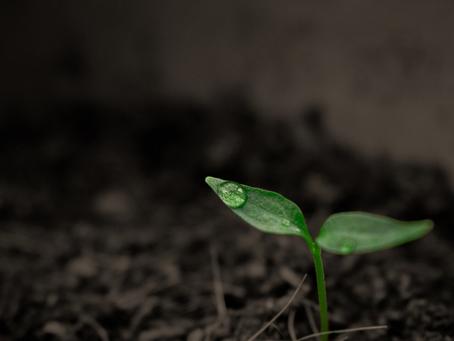 Você sabia que o solo também produz compostos orgânicos voláteis?