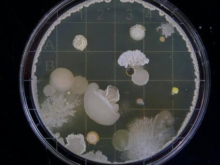 Óleos essenciais são muito eficientes contra patógenos humanos
