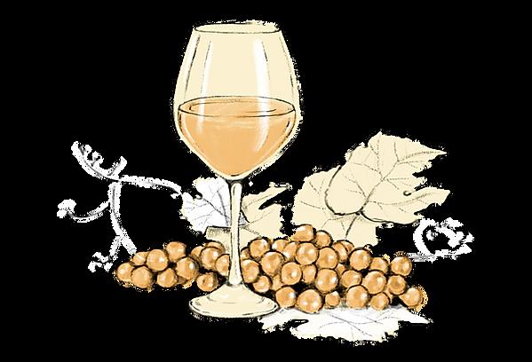 digital product illustration of sweet white wine