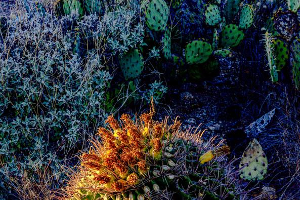 Sea Cactus
