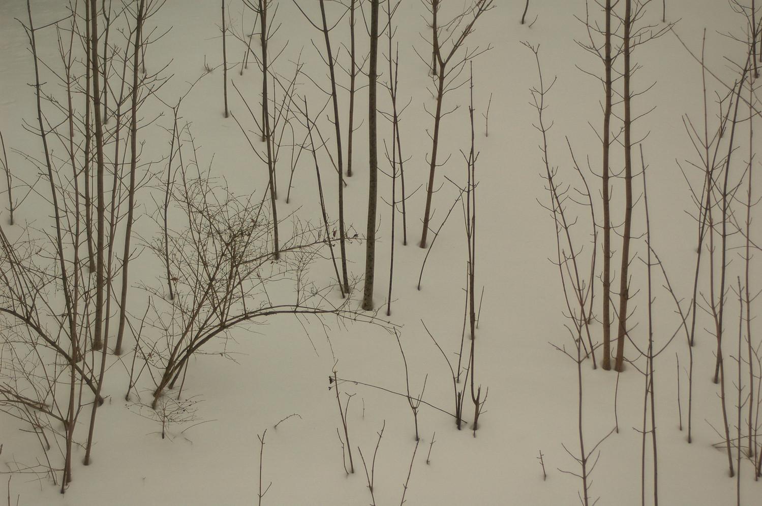 January Hillside