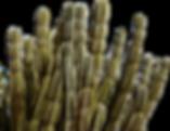 Raja Home_Cactus 1.png