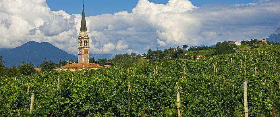 Vigneti-a-Breganze-con-il-campanile-sull