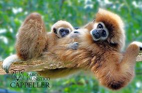 gibbone-mani-bianche-cappeller-1-700x460