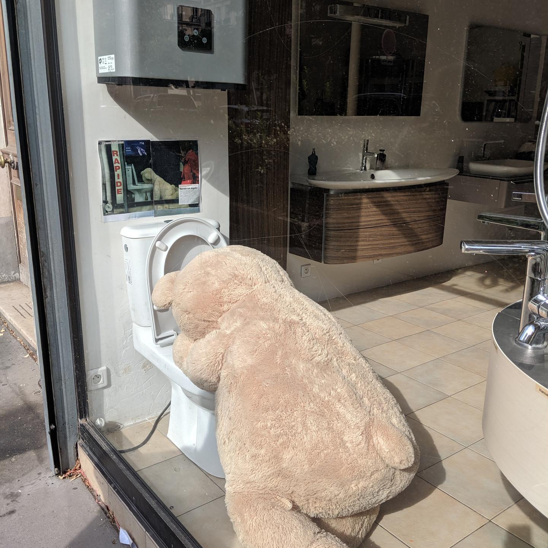 Paris Teddy Bear Throwing Up In Toilet