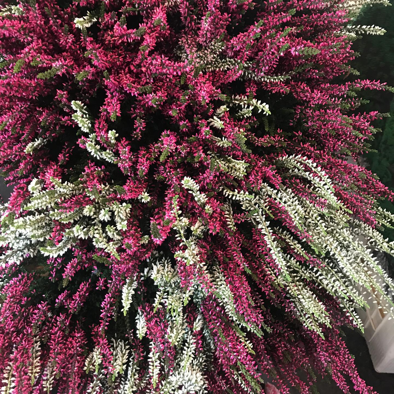 Paris Market Flower Stand