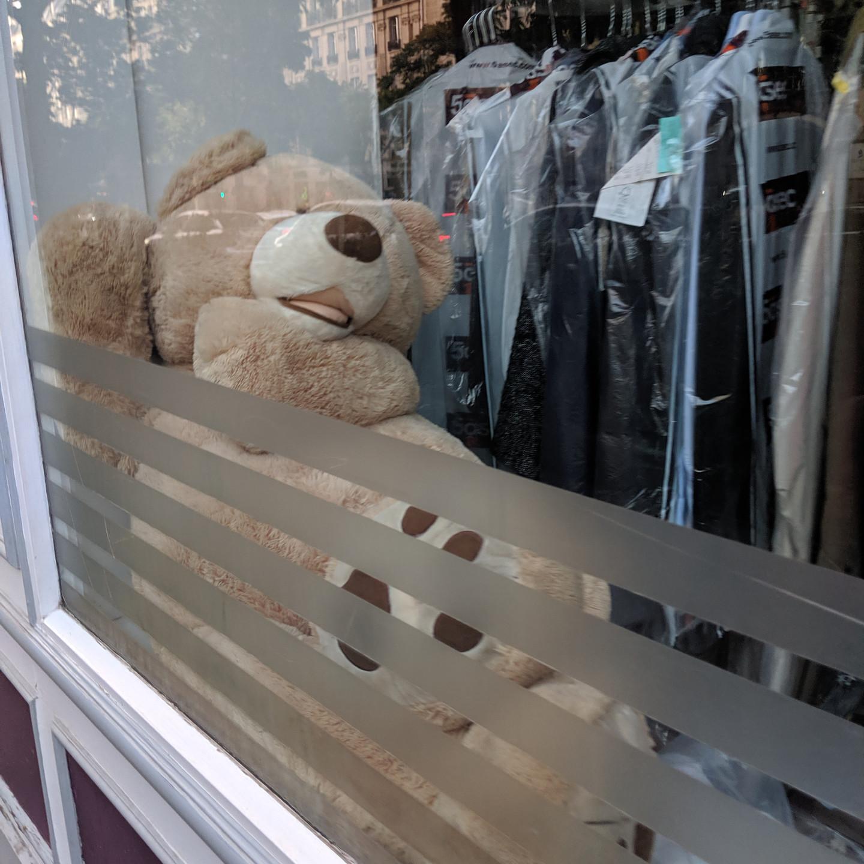 Paris Teddy Bear Reclining In Store Window