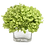Thumbnail: Preserved Hydrangea in Glass Crackle Vase