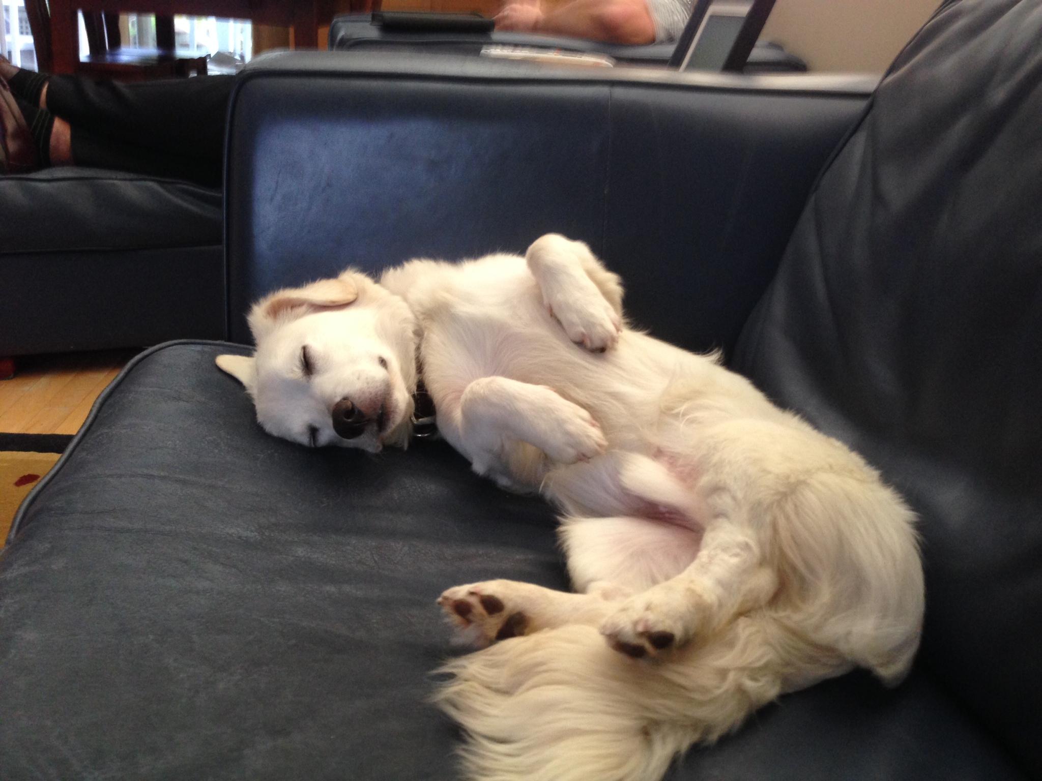 Lance sweet puppy