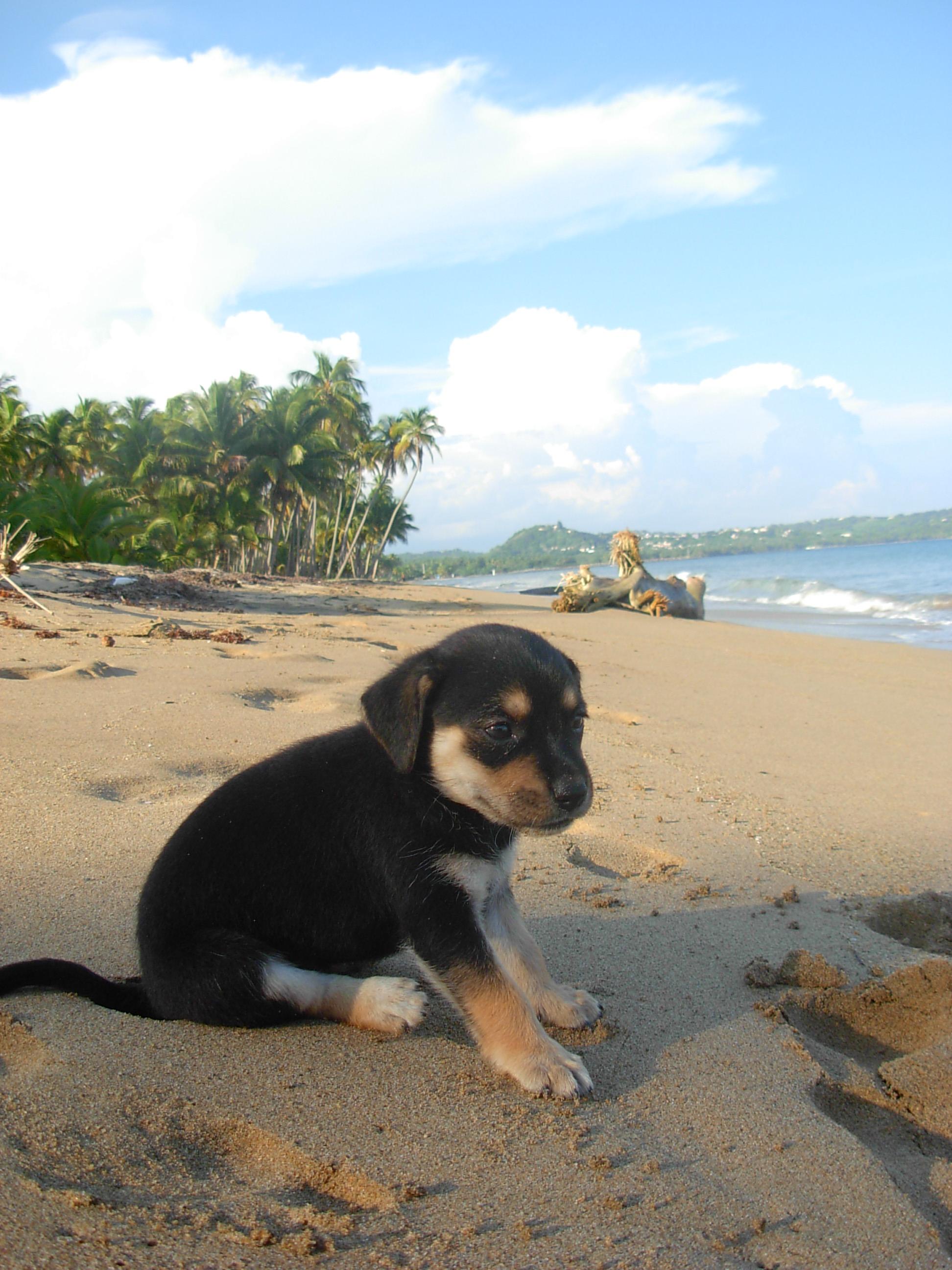 Coqui Sweet Pup