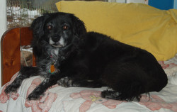 Dusty March 2004- August 2013