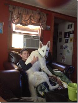 Luke the Lap Dog!