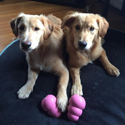 penny and lloyd