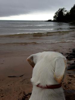 Enjoying the beach.JPG