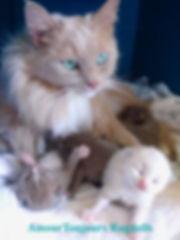 Bambi s babies 02 2020 .jpg