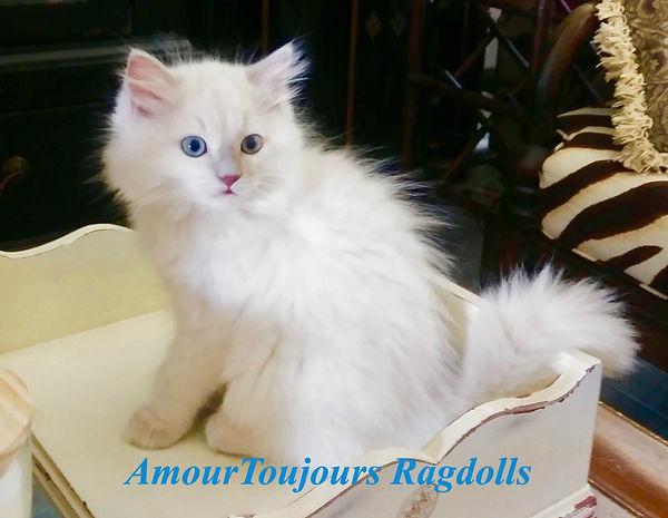 AmourToujours _edited.jpg