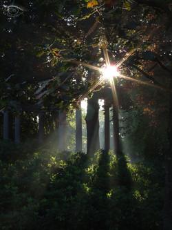 licht1.jpg