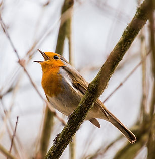 bird-2119874_1920_edited_edited.jpg