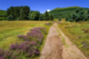landscape-3657268_1920.jpg