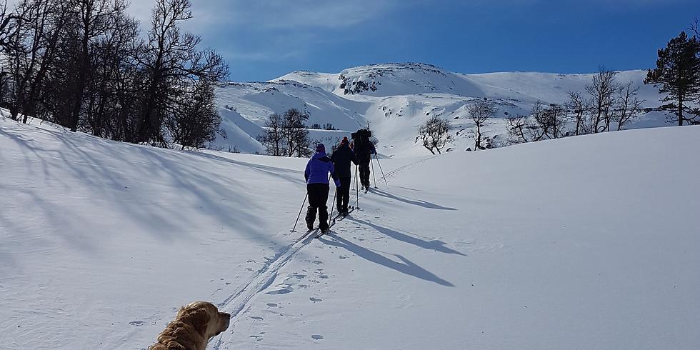 Skitur Bavallen - Lønahorgi