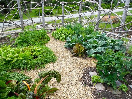 Copy of Nims Veg Garden 16.JPG