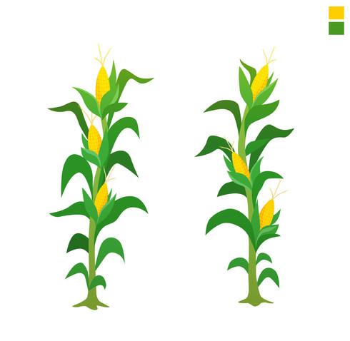 Plant_Mais_NordikStudio-_V2.jpg