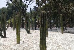 Chapultepec Botanical Garden