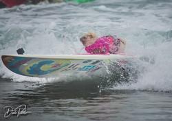 2018 Surf Dog Surf A Thon