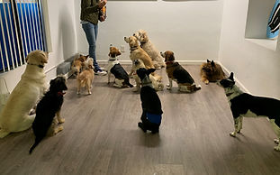 Dog Training IADL.jpg