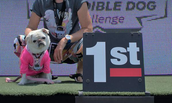 Purina Incredible Dog Challenge July 16, 2021_edited.jpg
