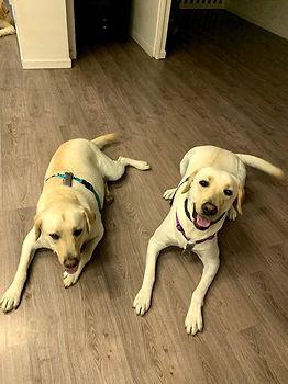 IADL Dogs #3.jpg