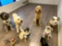 IADL Dogs #1.jpg