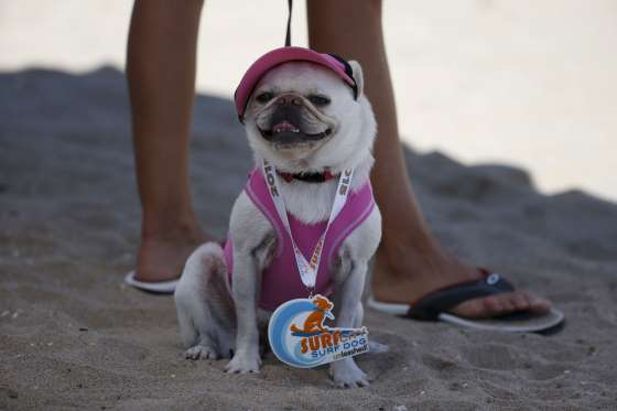 2015 Surf City Surf Dog
