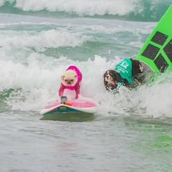 2016 Surf Dog Surf A Thon