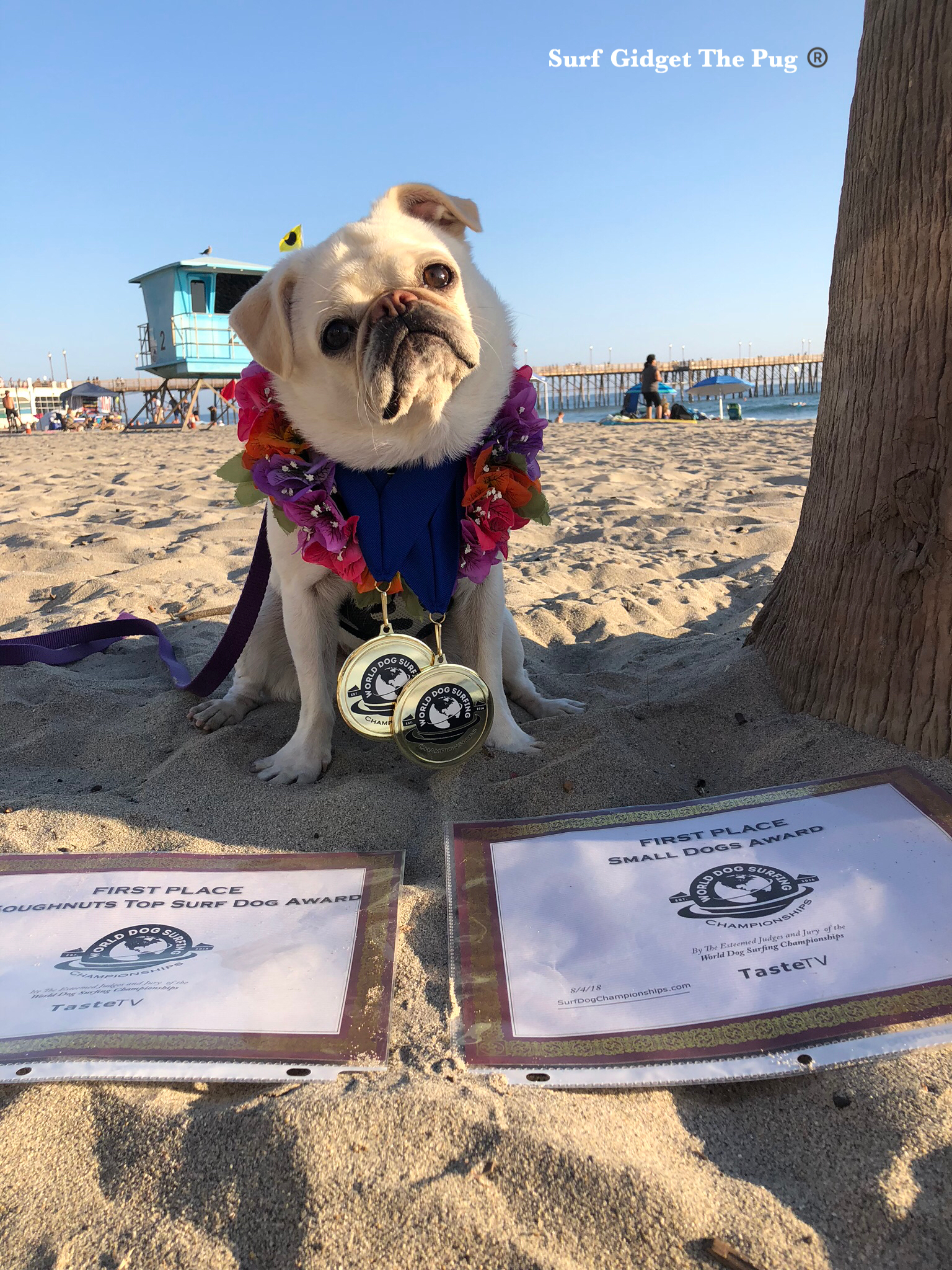 2018 World Dog Surf Champ Top Dog