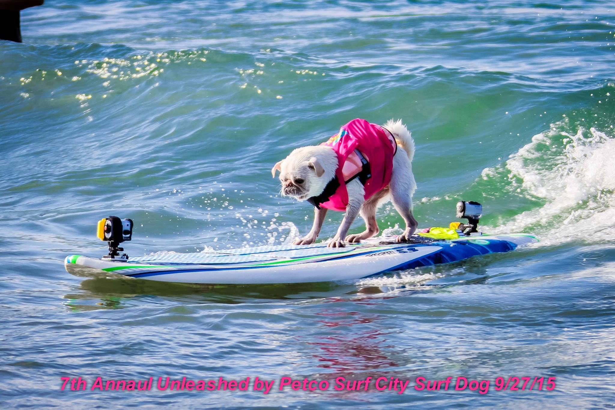2015 HB Surf City Surf Dog