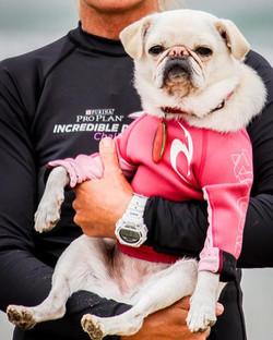 Incredible Dog Challenge 2016