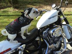 Modeling Harley Davidson