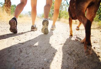 Adventure pack walks, pack walks