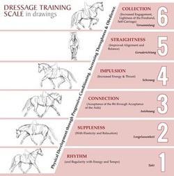 Training Scale