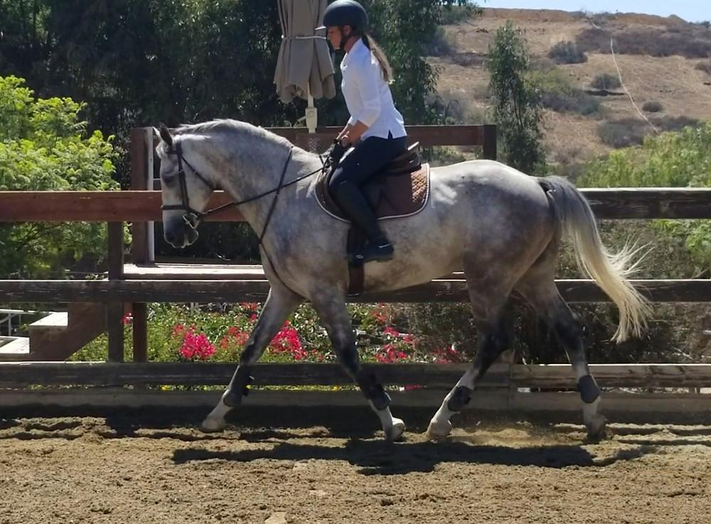HaricoSSB Blackjack Farm Dapple Grey Horse