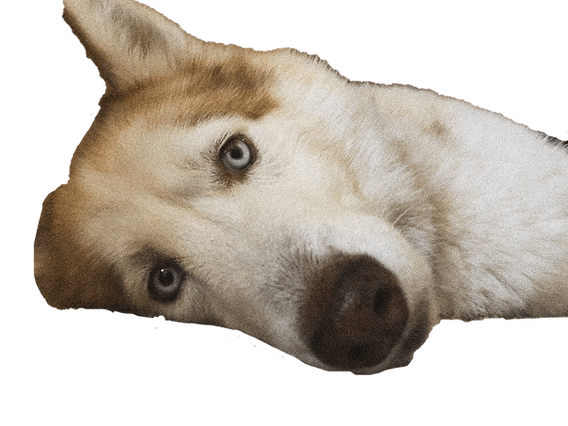 Help Dog.png
