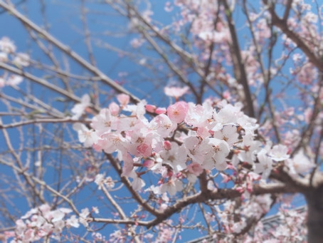 嬉しい春になりました♪