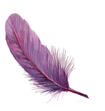 feather_edited.png