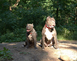Tank & Sienna Daughter and Grand Daughter 1.6 years old and 4 months old